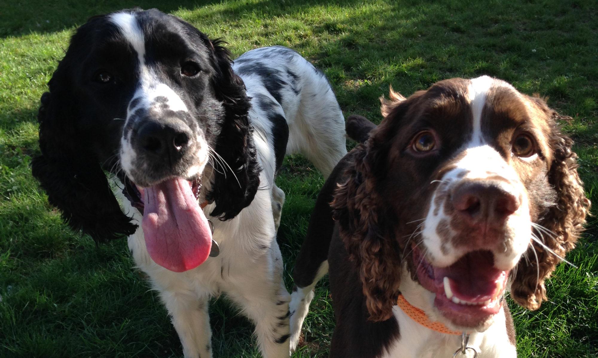 Conseils en éducation canine pour votre chiot ou chien